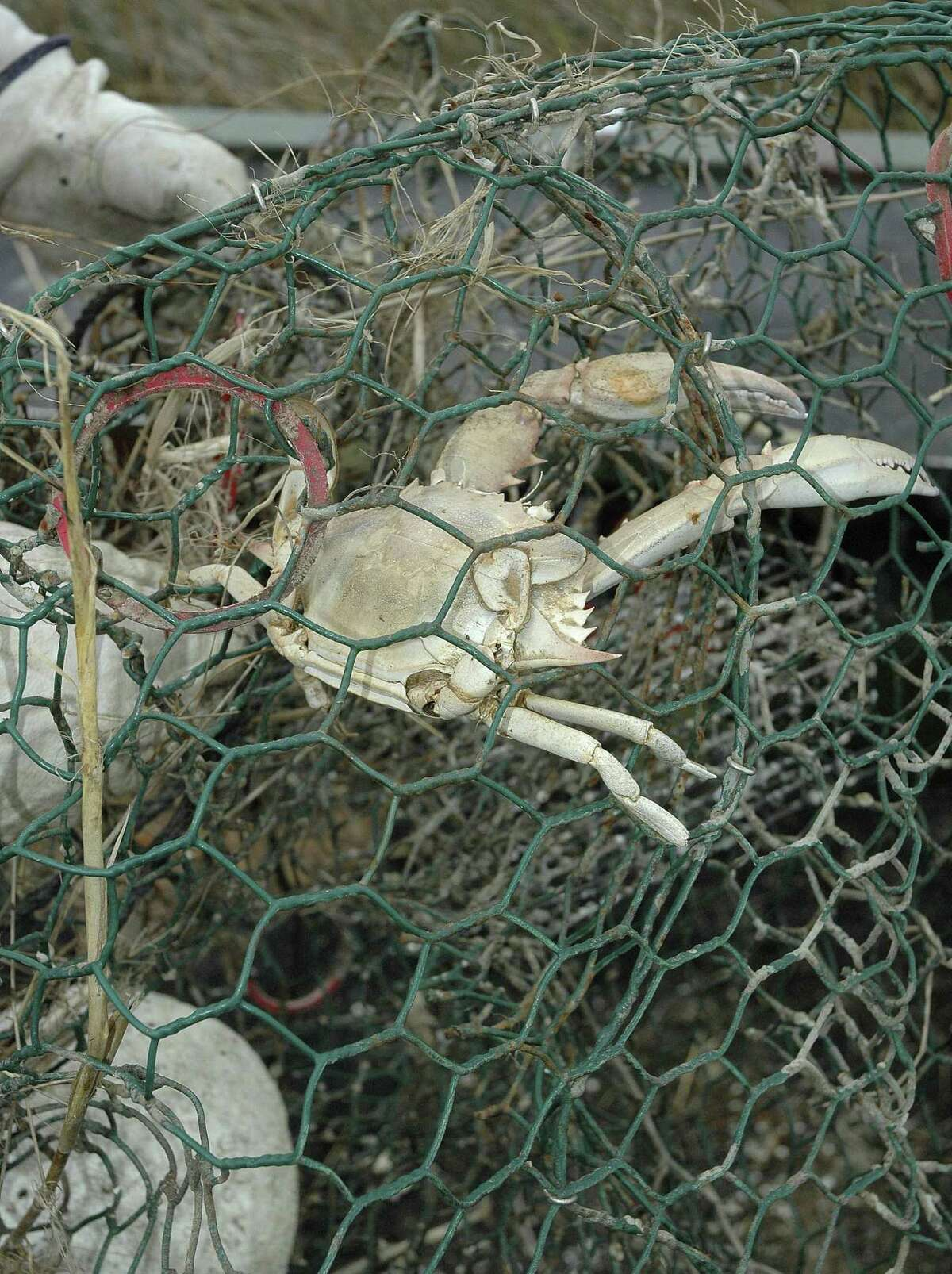 Abandoned crab traps can continue catching, and killing, crabs and other marine life. Texas' annual closure of bays to all crabbing and associated volunteer effort to remove derelict traps runs Feb.16-25, with most clean-up effort planned for Saturday, Feb. 17.
