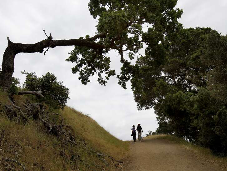 Huge oak trees can dwarf visitors to the Mount Burdell Open Space Preserve in Novato, a 1,600-acre open space with great views from the 1,558-foot mountaintop and dog-friendly rules.