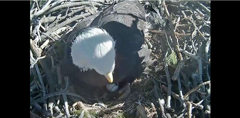 Screen captures from the live stream of the bald eagle nest at Big Bear Lake, California on Feb. 11, 2018. Photo: The Friends Of Big Bear Valley
