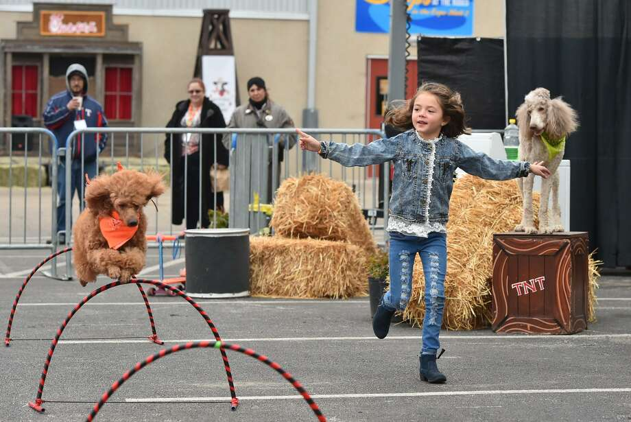 Katerina Pompeyo guides one of her family dogs during the Pompeyo Family Dog Show Sunday at the San Antonio Stock Show and Rodeo. The Pompeyo Family Dog Show is one of the new attractions at this year's San Antonio Stock Show & Rodeo. The show, which has toured in the U.S., Canada and the Caribbean, is running through Tuesday at the Family Fair area. Photo: Photos By Robin Jerstad /For The San Antonio Express-News / ROBERT JERSTAD