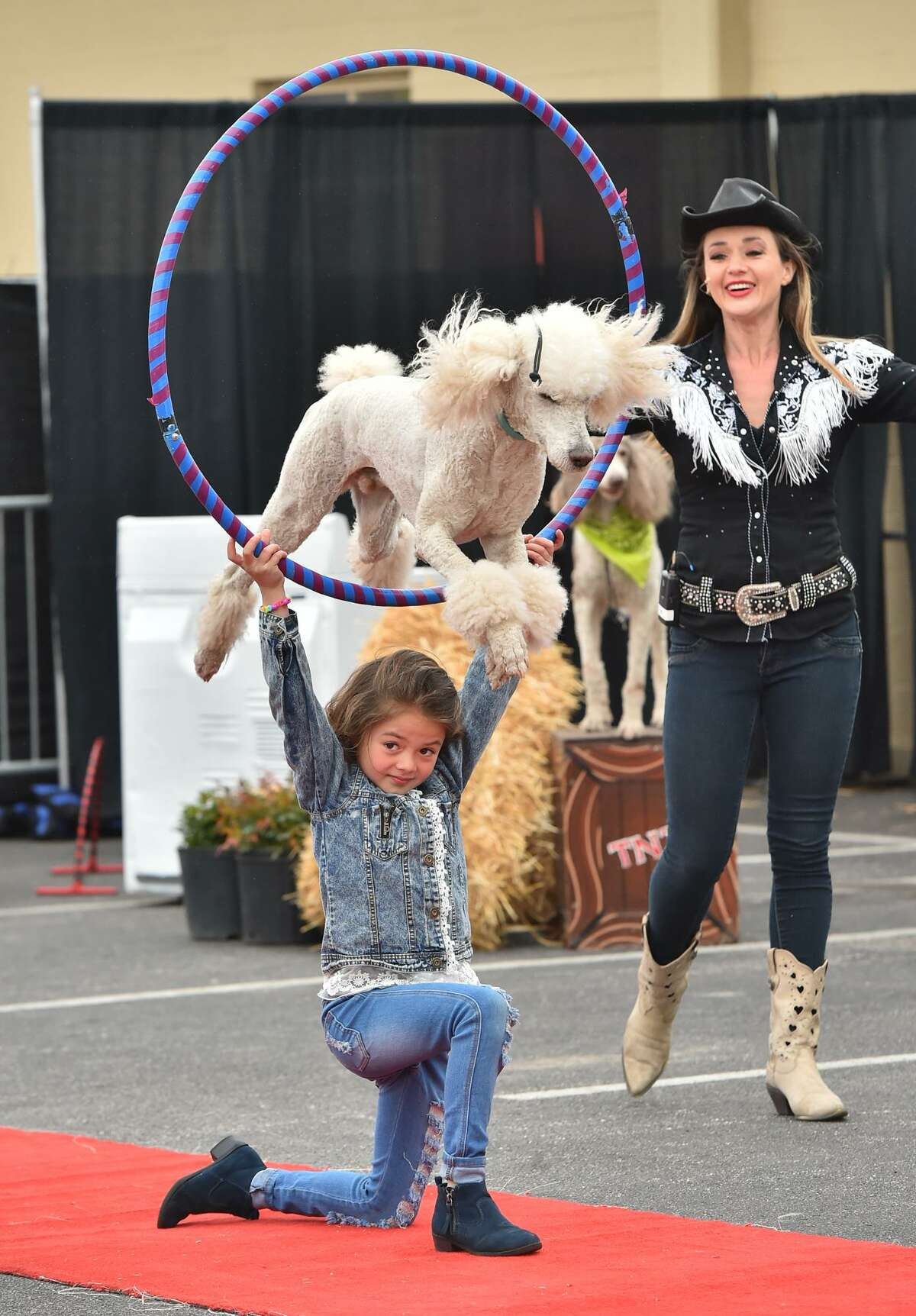 Katerina Pompeyo has a show poodle soar over her head as her mother, Natalya Pompeyo looks on. The Pompeyo Family Dog Show is one of the new attractions at this year's San Antonio Stock Show & Rodeo. The show, which has toured in the U.S., Canada and the Caribbean, is running through Tuesday at the Family Fair area.