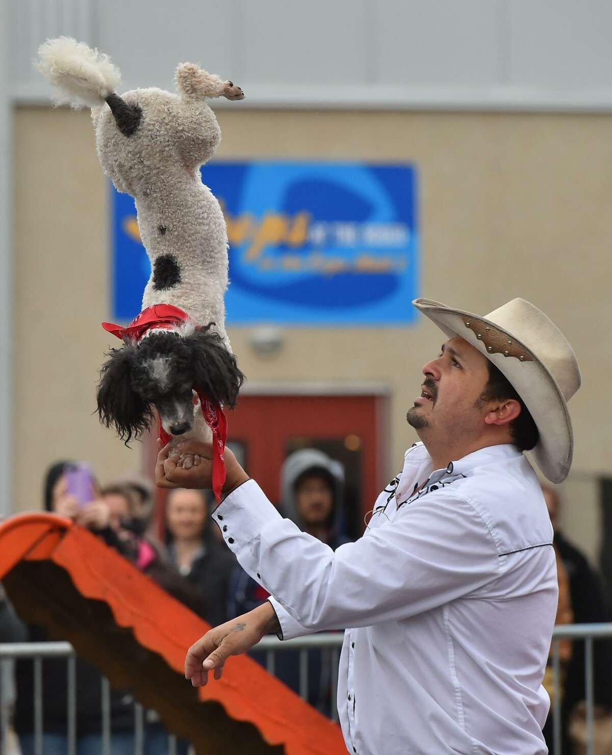 One of the canine entertainers balances on its front paws in Jorge Pompeyo's palm. The family wants to show audience members what rescue dogs can accomplish.