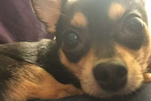 Dunky, a 4-year-old Chihuahua, died after a suspect broke into a car and threw him over a railing near San Francisco's Union Square, police said.