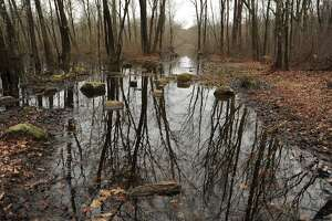 The Roosevelt Forest in Stratford will expand under an open-space grant announced on Monday.
