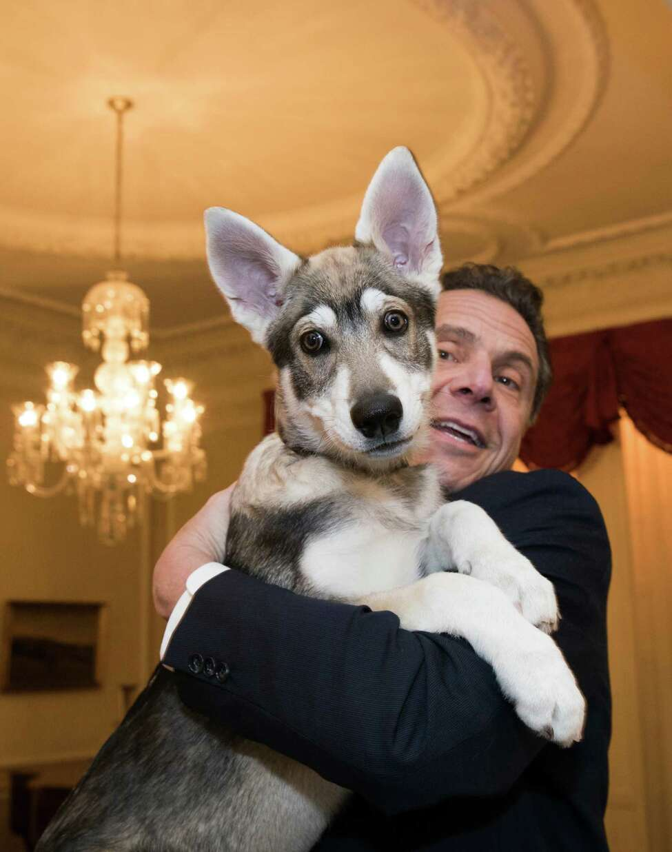 Gov. Andrew Cuomo holds his new Northern Inuit puppy, Captain, at the Executive Mansion on Feb. 12, 2018, in Albany, N.Y.