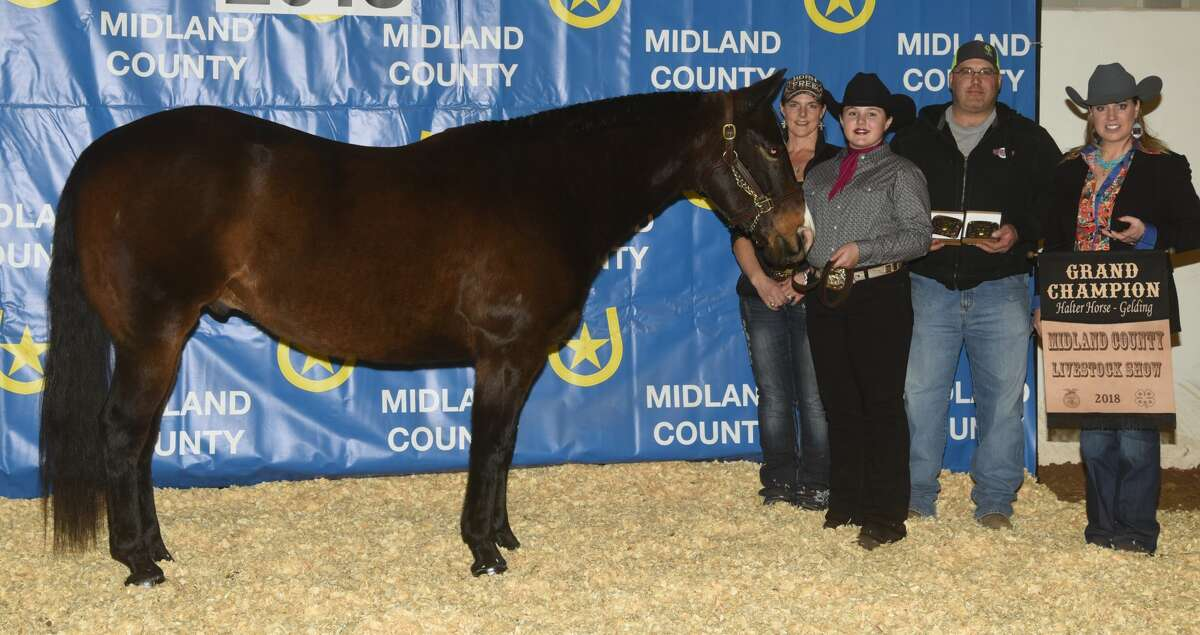 Grand Champion halter gelding shown by Hunter Matyico