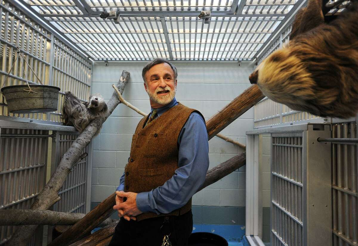 Zoo Director Gregg Dancho plays matchmaker to two-toed sloths Jabba, left, and Hope at the Beardsley Zoo in Bridgeport, Conn. on Tuesday, February 13, 2018.