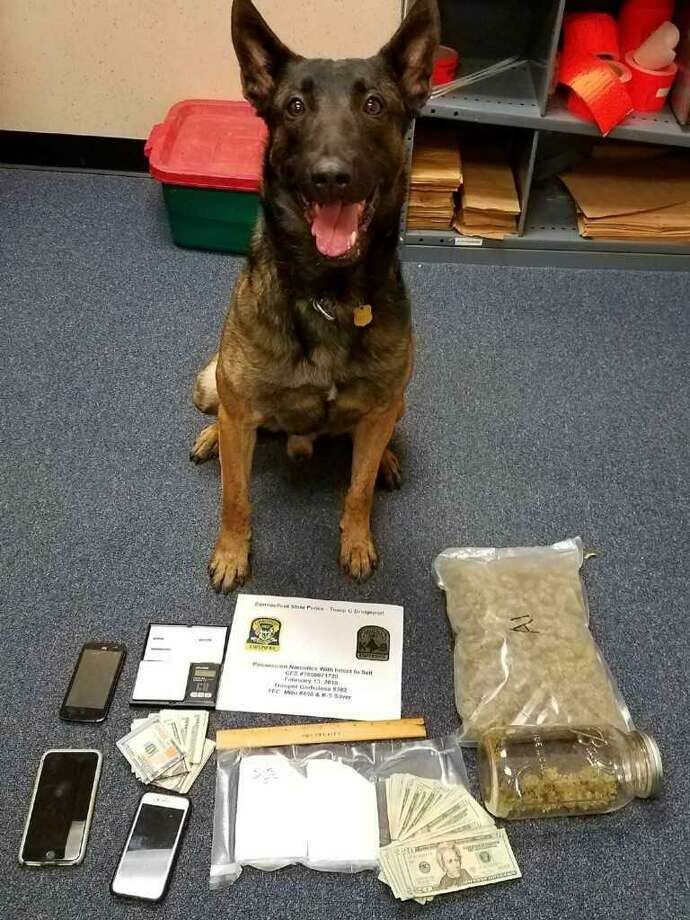 Connecticut State Police drug detection canine Silver helped in the investigation that led to the seizure of cocaine, marijuana and cash, police said. Photo: Connecticut State Police / Contributed Photo