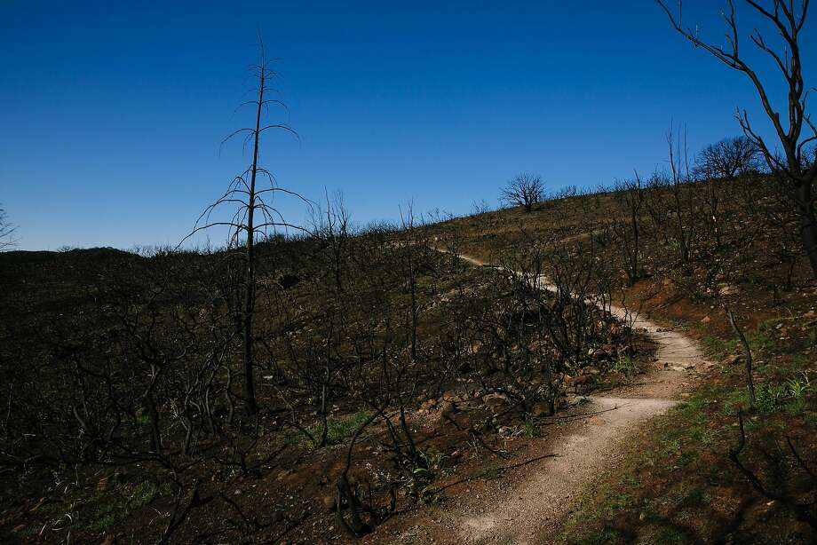 A charred hillside at Sugarloaf Ridge State Park in Santa Rosa is a grim reminder of the devastation of October's fierce blazes. Photo: Mason Trinca, Special To The Chronicle