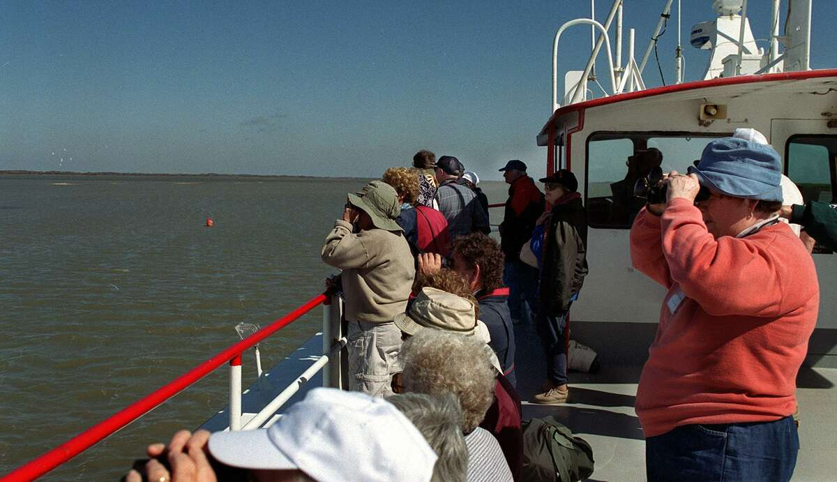 Birders on board the Wharf Cat check out the whooping cranes feeding at the Aransas National Wildlife Refuge.