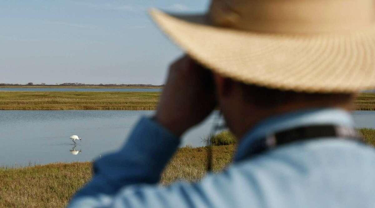 Bird watchers observe a whooping crane feeding in 2010 near Fulton.