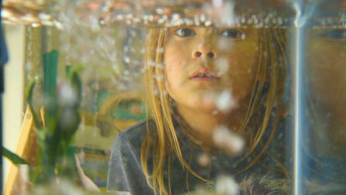 """""""A View From the Window,"""" by Christian Filippone, is an immersive glimpse of a school day through the eyes of deaf children. One of the shorts to be shown at the at the Bay Area International Children's Film Festival February 23-25, 2018 at the Chabot Space & Science Center in Oakland."""
