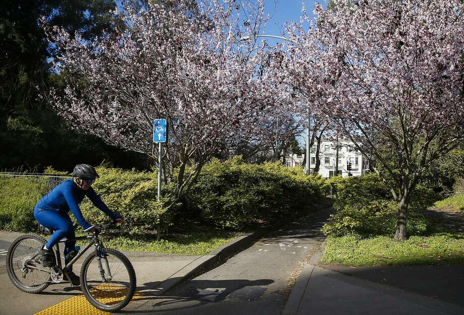 A person cycles past two cherry blossom trees near Fulton Street in Golden Gate Park on Wednesday, Feb. 14, 2018 in San Francisco, Calif. After steady storms for more than two weeks, the Bay Area should see sunny skies for the rest of the weekend, forecasters said. Photo: Jessica Christian / The Chronicle