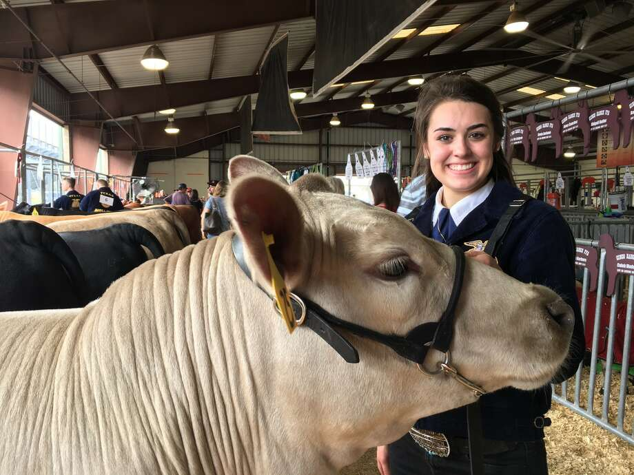 Cinco Ranch High School junior Rachael Wheeler raised the grand champion steer which will be auctioned Saturday at the Katy Independent School District FFA Livestock Show & Rodeo. His name is Jax. Photo: Karen Zurawski