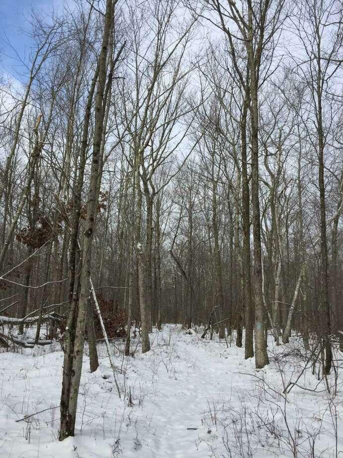 Forest Walk—the Mattatuck Trail in Warren. Photo: Rob McWilliams / For Hearst Connecticut Media