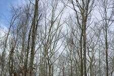 Forest Walk—the Mattatuck Trail in Warren.