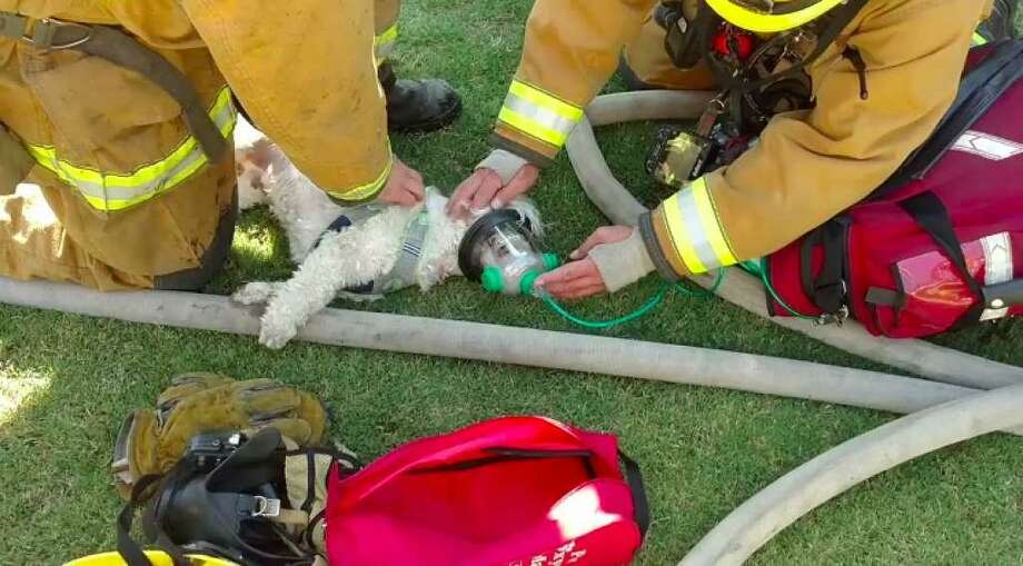 Firefighters attempt to resuscitate a dog pulled from a Bakersfield house fire on Wednesday, July 19, 2017. Photo: Bakersfield Fire Department / Bakersfield Fire Department /