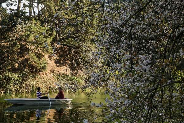 A couple rows a small boat past a tree of cherry blossoms along Stow Lake in Golden Gate Park Wednesday, Feb. 14, 2018 in San Francisco, Calif.