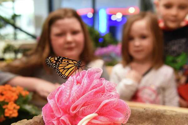 """From left, Siblings Ella Pytlovany, 10, Sadie Robyck, 4, and Logan Robyck, 6, of Sloansville look at a Monarch butterfly at the """"Discover Butterflies"""" exhibit at miSci on Friday, Feb. 16, 2018 in Schenectady, N.Y. (Lori Van Buren/Times Union)"""