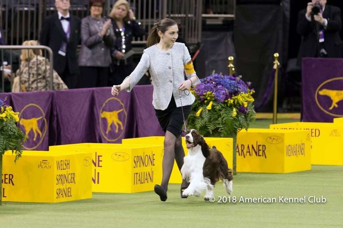 Lily Mancini, 18, of Sherman, with her dog, Liam, won Best Junior Showmanship Championship at the Westminster Dog Show Tuesday, Feb 13, 2018.
