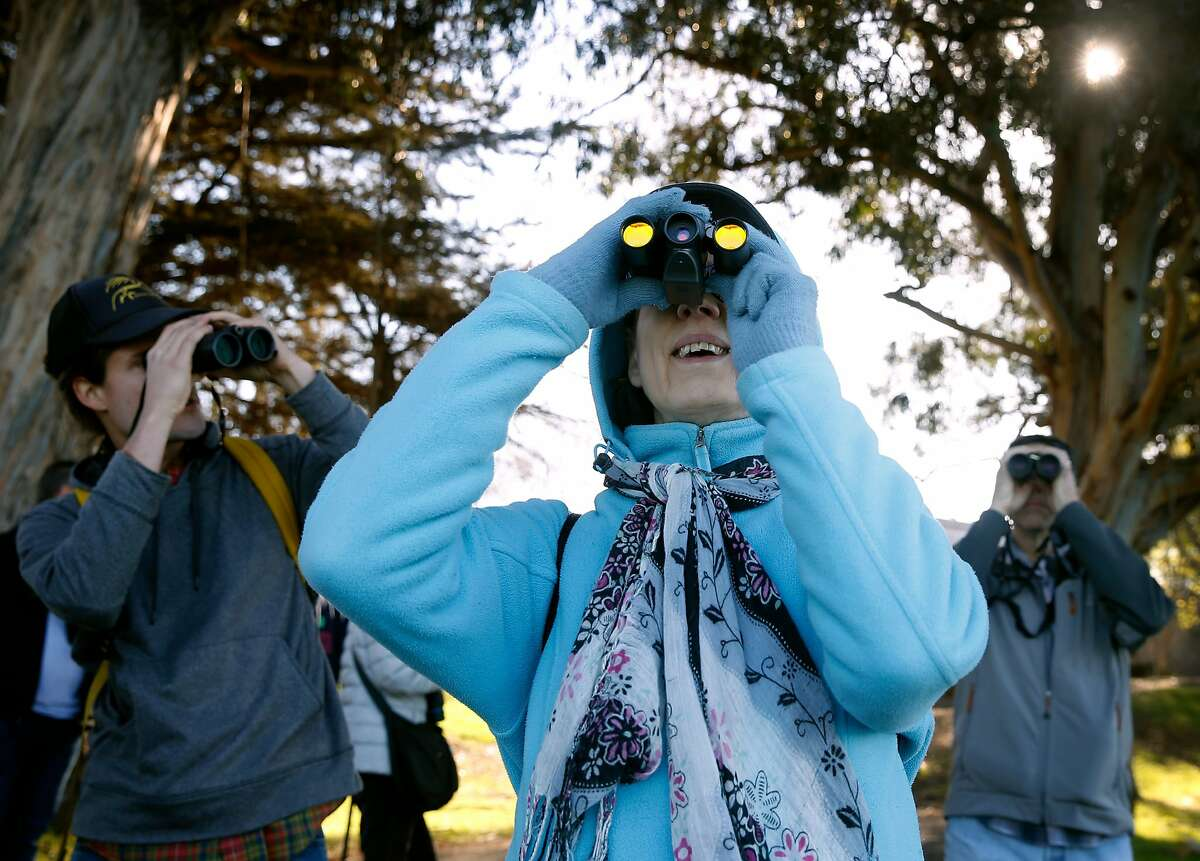 Janice Lalley observes birds flying overhead during the Great Backyard Bird Count at Aquatic Park in Berkeley, Calif. on Saturday, Feb. 17, 2018.