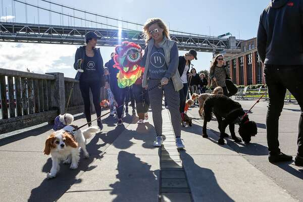 Kristine Karaman (center) and others walk their dogs during the Puppy Embarcadero Walk to celebrate the Year of the Dog on Friday, February 17, 2018 in San Francisco, California.