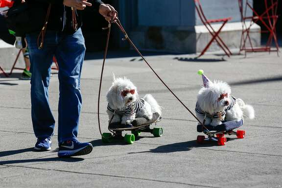 Chloe and Ruby participate in the Puppy Embarcadero Walk to celebrate the Year of the Dog on Sunday in San Francisco.