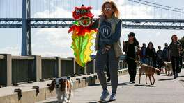 Kristine Karaman carries a celebratory dragon as she walks her dog Tico during the Puppy Embarcadero Walk to celebrate the Year of the Dog on Friday, February 17, 2018 in San Francisco, California.