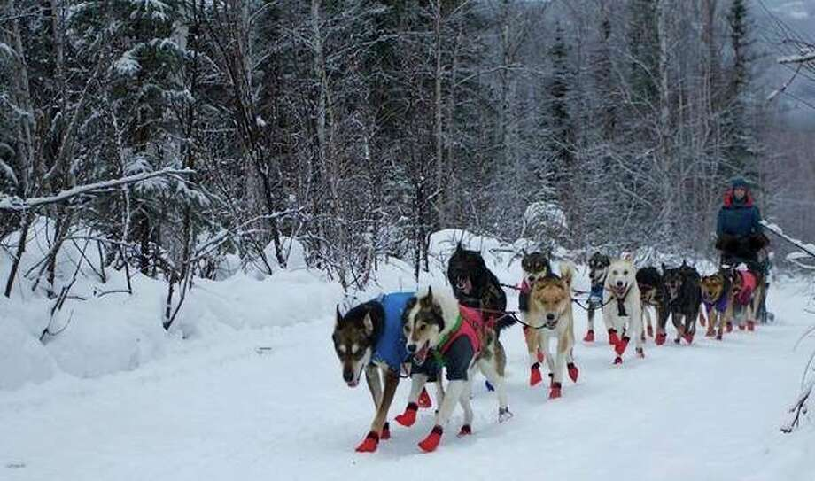 Shaynee Traska, originally from Gladwin and now living in Alaska, works with her dogs in prepping for the upcoming 1,000-mile Iditarod. Traska and her team of 16 dogs will compete aginst an estimated 60 other teams in the Iditarod.