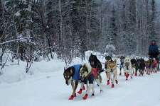 Shaynee Traska,originally from Gladwin and now living in Alaska, works with her dogs in prepping for the upcoming1,000-mile Iditarod. Traska and her team of 16 dogs will compete aginst an estimated 60 other teams in the Iditarod.
