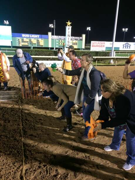 Dachshunds dash for wiener's circle at Sam Houston Race ...