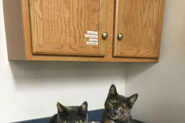 The Branford Compassion Club will hold a food, supply drive in celebration of the seventh anniversary of BCC Feline Rescue & Adoption Center, 2037 Foxon Road, North Branford. The event, with cake and refreshments, will be held 11 a.m.-3 p.m. Feb. 24. Donations of unopened canned and dry cat and kitten food, paper towels, kitchen trash bags, Tidy Cat clumping litter, laundry (HE) and dish detergent or cash will be accepted for the shelter and feral cats. Info: www.branfordcompassionclub.org.