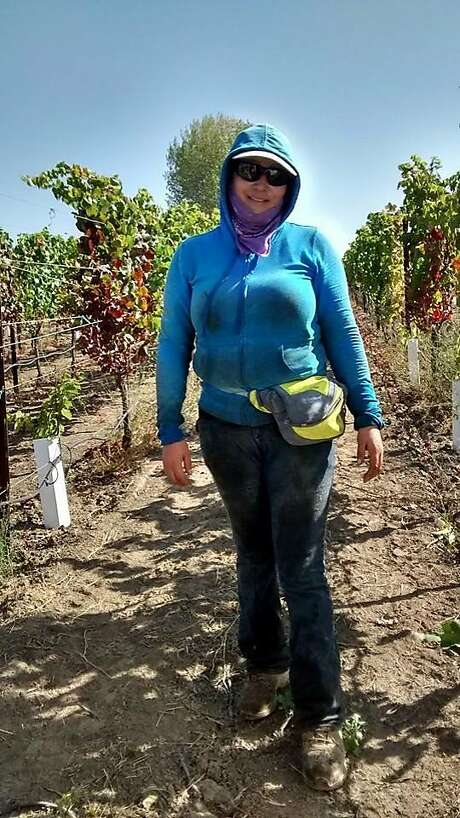 Maria Bucio, top, at work at the Renteria 360 Vineyard in Rutherford. Above: Grapes at the vineyard in July 2017. Photo: Maria Bucio