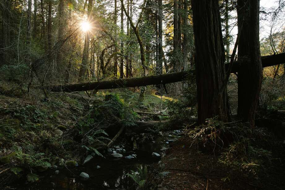 Ritchey Creek flows next the towering redwoods along the Redwood Trail at Bothe-Napa Valley State Park in St. Helena. Photo: Mason Trinca, Special To The Chronicle