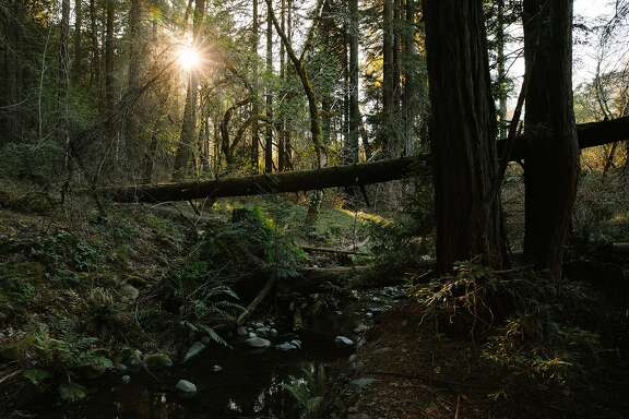 Ritchey Creek flows next the towering redwoods along the Redwood Trail at Bothe-Napa Valley State Park in St. Helena, Calif. Friday, Feb. 16, 2018.