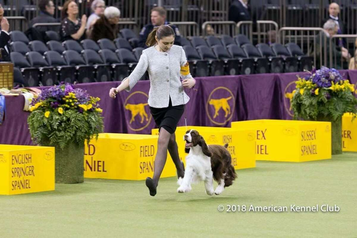 Lily Mancini, 18, of Sherman, with her English springer spaniel, Liam, won the Best Junior Showmanship title at the Westminster Dog Show on Tuesday.