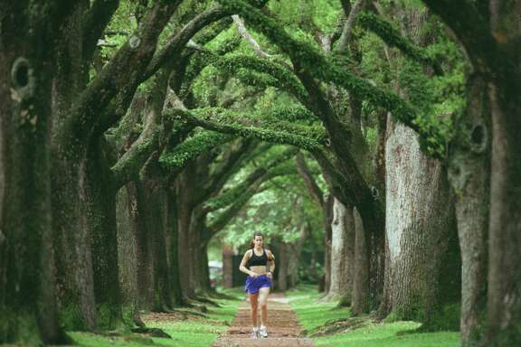 On or about March 1, live oaks drop their leaves each year. The releafing happens so fast sometimes that you wouldn't notice the leaf drop except for the leaves on the lawn.