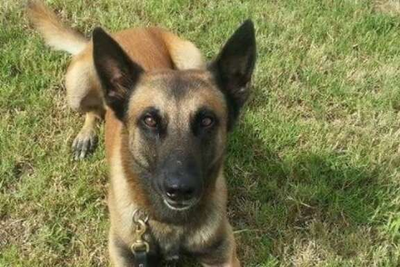 Ronny, a K-9 officer with the Houston Police Department, had to be euthanized early Wednesday, Feb. 21, 2018, after breaking his leg during a pursuit.