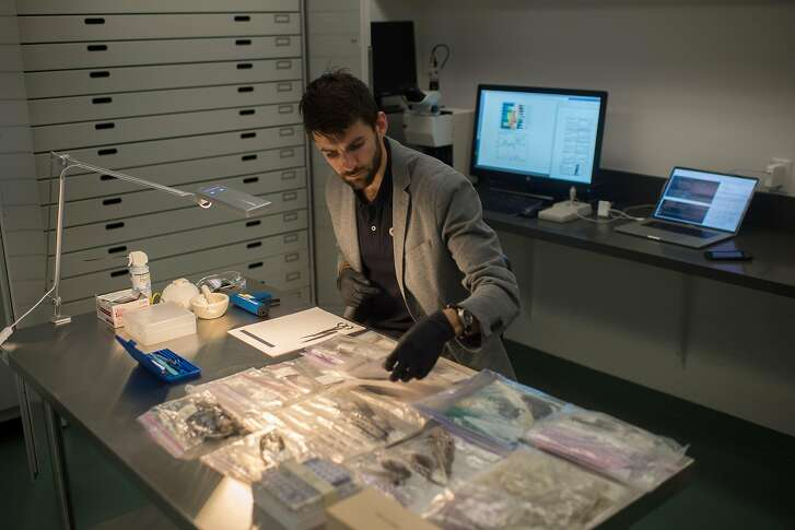 Tyler Gagne, an assistant research scientist with the Monterey Bay Aquarium, examines bird feathers inside his lab in Monterey, Calif. on Feb. 19, 2018.