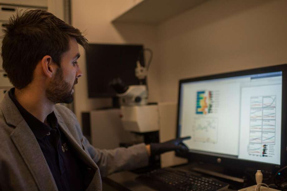 Tyler Gagne, an assistant research scientist with the Monterey Bay Aquarium, looks over the data showing changes to bird diets over 130 years. Photo: Nic Coury, Special To The Chronicle