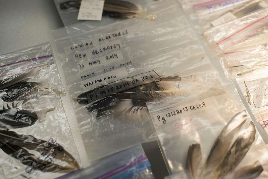 Bird feathers inside a lab at the Monterey Bay Aquarium. Photo: Nic Coury, Special To The Chronicle