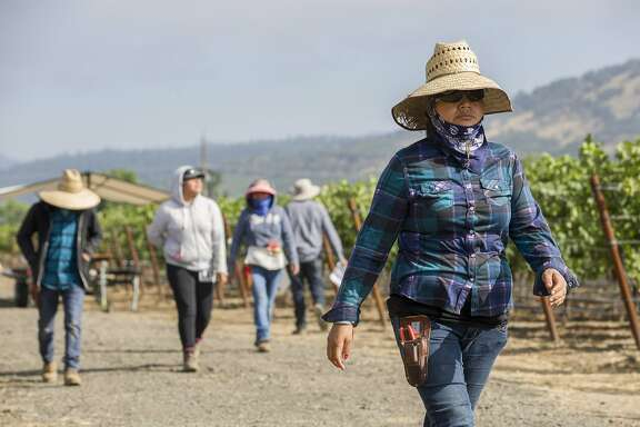 Sabina Santiago heads to maintain the Renteria Vineyards on Wednesday, July 19, 2017, in Napa, Calif.