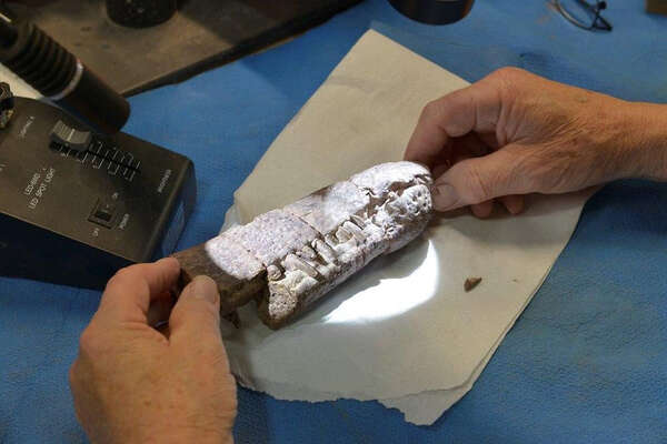 Snout of the Triassic phytosaur Pravusuchus, part of a specimen looted from BENM in the 1990s.