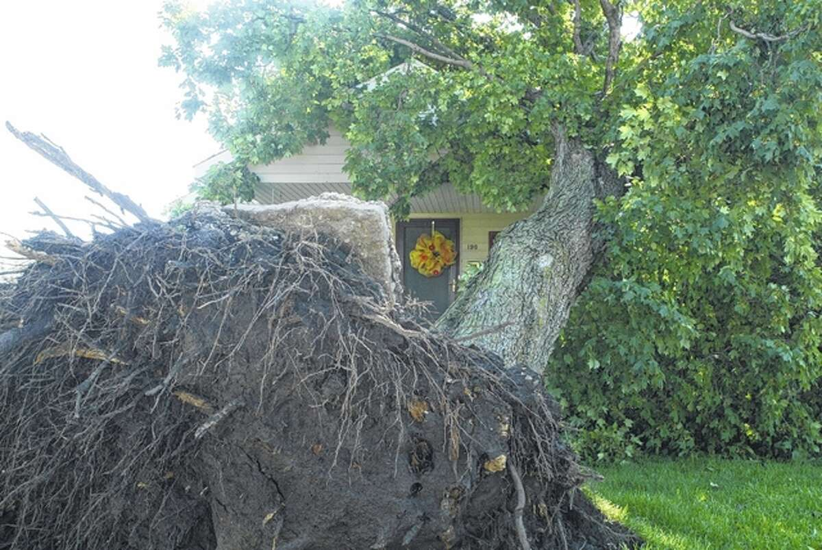 A large tree rests against a house in Winchester after it was uprooted by powerful winds during Monday night's storm.