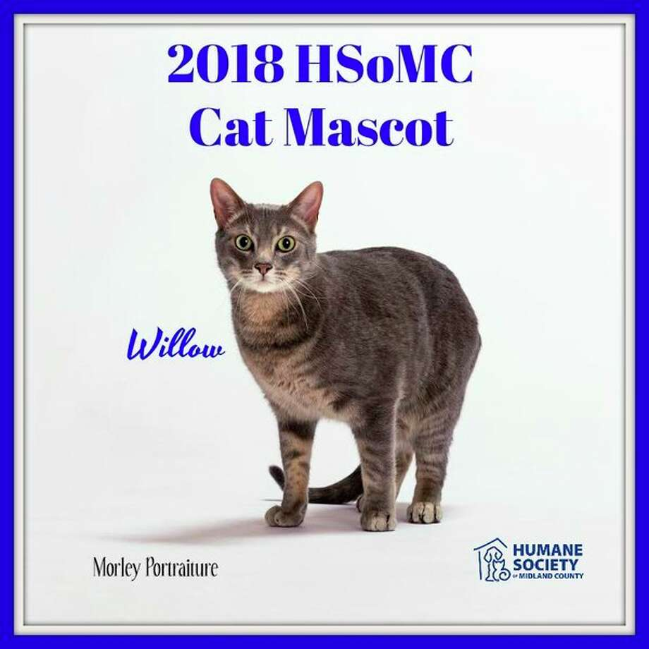 The Humane Society of Midland County 2018 cat mascot Willow.