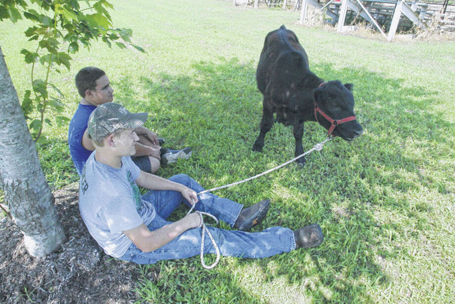 Scott County 4-H member James Spencer, 16, of rural Winchester (seated, foreground) rests in the shade Tuesday while his 5-month-old Angus-cross bull calf, Romeo, grazes at the Scott County Fairgrounds. Sitting next to Spencer is Shawn Brown, 13, of Winchester. This year marks the first time Spencer has shown cattle. Photo: Greg Olson | Journal-Courier