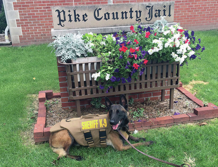Baxter, the Pike County Sheriff's Department's canine officer, received a protective vest as part of a nationwide campaign to help protect law enforcement animals. Photo: Photo Courtesy Of The Pike County Sheriff's Department