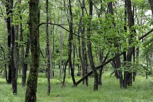 File photo of woodlands in Sherman, Conn.