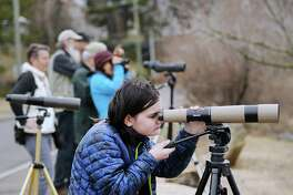 Kaela Knoor, 11, of Stamford, took part in the Great Backyard Bird Count, led by Audubon Naturalist and Environmental Educator Ted Gilman, at Grass Island in Greenwich, Conn., Friday, Feb. 16, 2018. Knoor said her favorite bird is the Red-tailed Hawk. The Great Backyard Bird Count is a world-wide event launched by the Cornell Lab of Ornithology and National Audubon Society in 1998, and lasts from Feb. 16 - 19. Birders collect data on birds counted in real-time, that is posted to the Great Backyard Bird Count web-site:http://gbbc.birdcount.org