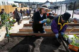 Maria Uchi plants edibles into the dirt, including a calamansi citrus tree, with her sister-in-law Belen Uchi (right) on the opening day of the Geneva Community Garden in San Francisco, Calif. on Saturday, Feb. 24, 2018. The garden, located one block from the Balboa Park BART station, is the 40th managed by the Recreation and Parks Department.